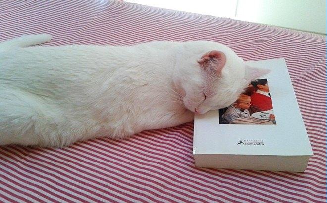 FOTO 27 Somiant llegir